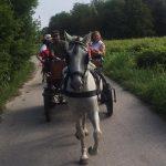 single mit Kind Urlaub am Bauernhof - Pferdekutschfahrt